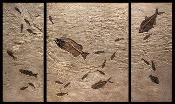 Ancient Treasures: Fossils from The Eocene Exhibition Opens May 9th at the Wilensky Gallery